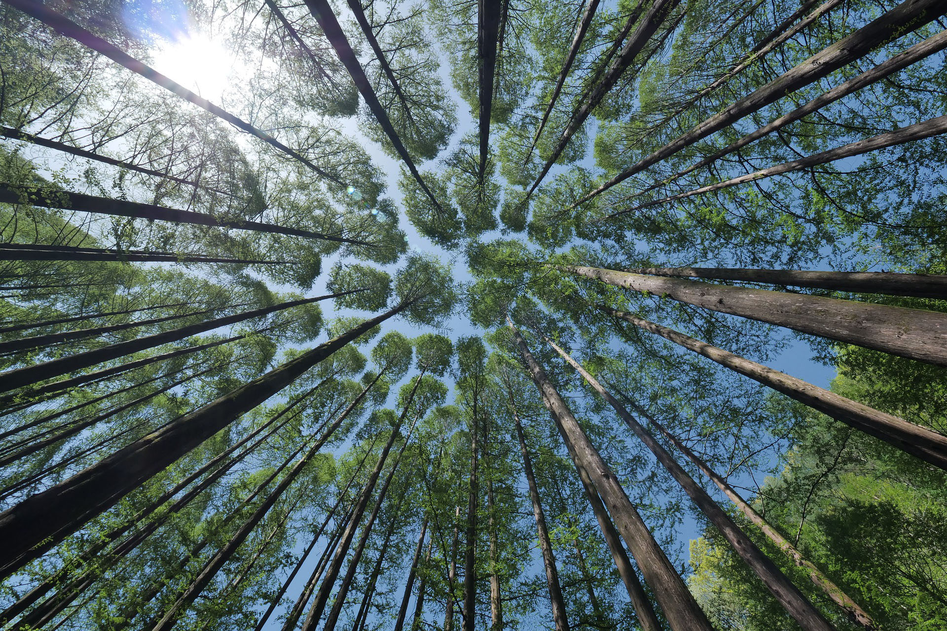 árboles Vía Ágora
