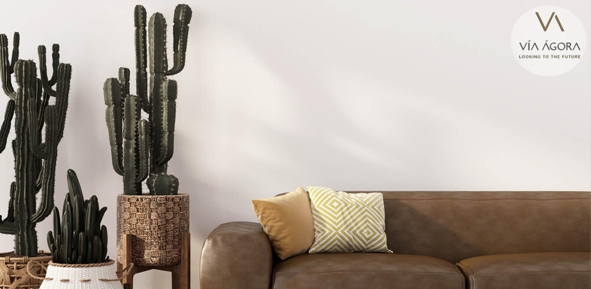cactus-via-agora