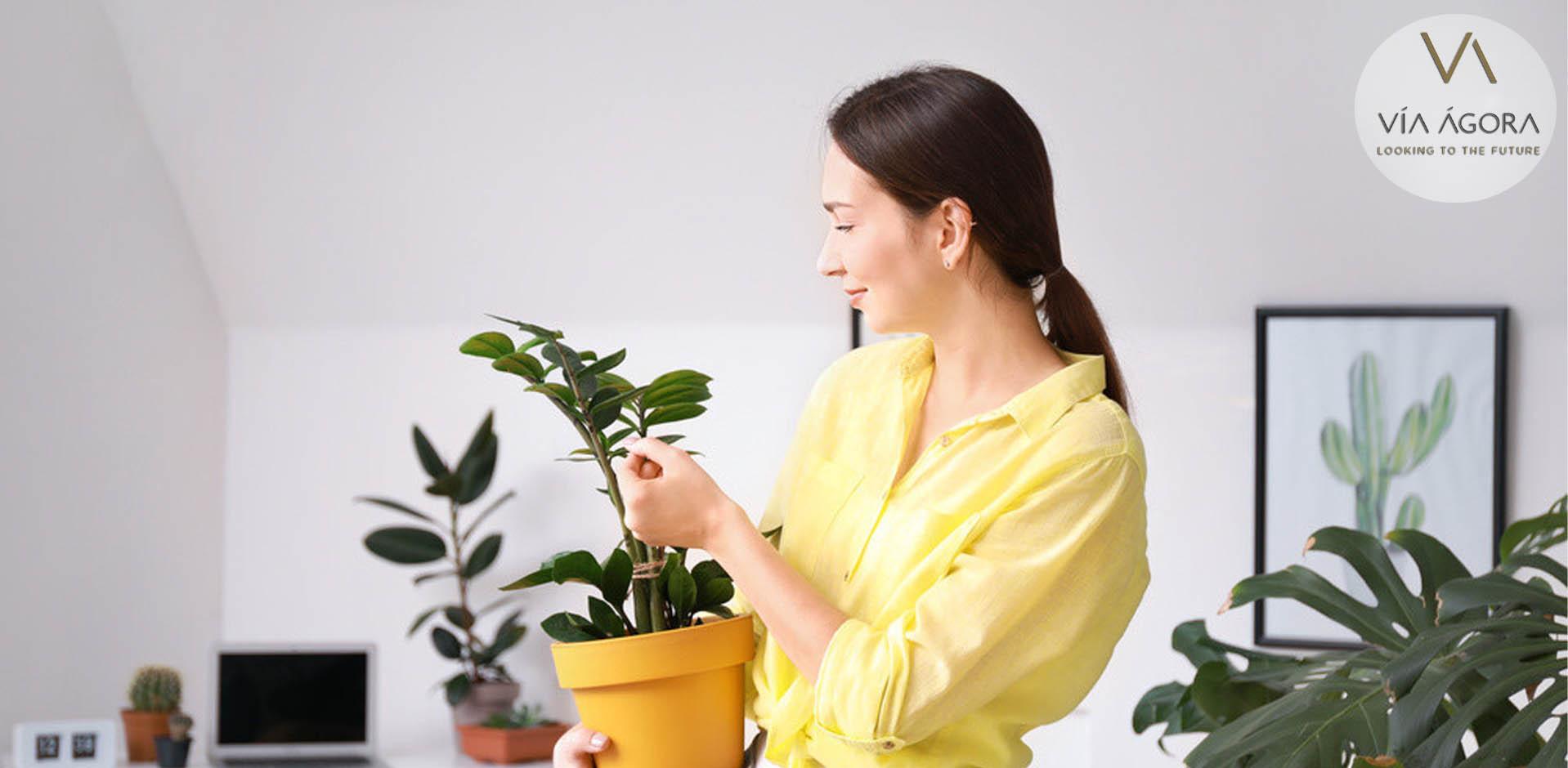 caracteristicas-plantas-via-agora
