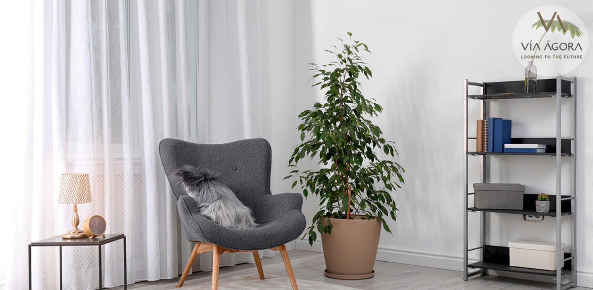Ficus Vía Ágora