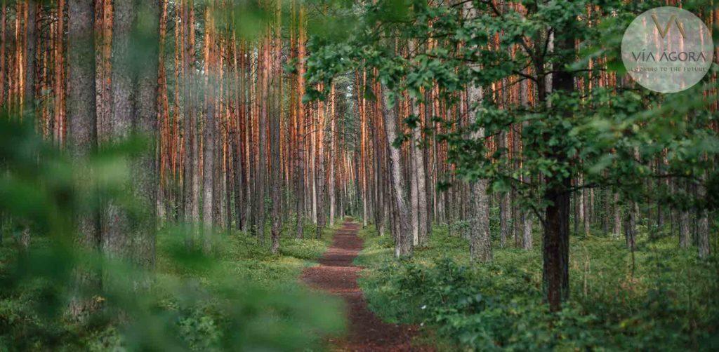 naturaleza-parque-valdebebas
